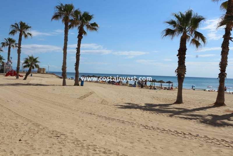 Appartement - De location - La Mata - La Mata